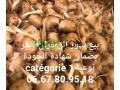 byaa-bthor-oshaayrat-alzaafran-alhr-small-2