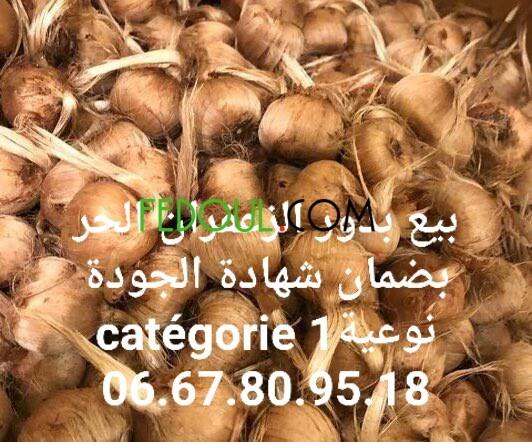 byaa-bthor-oshaayrat-alzaafran-alhr-big-2