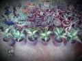 plantes-dinterieurs-small-2