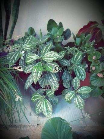 plantes-dinterieurs-big-16