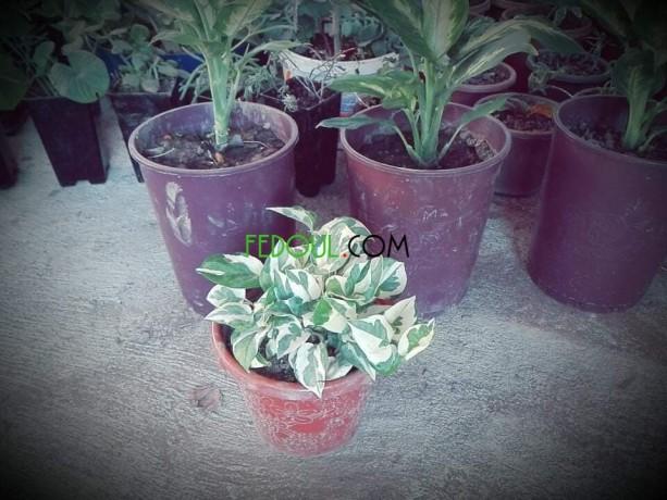 plantes-dinterieurs-big-1