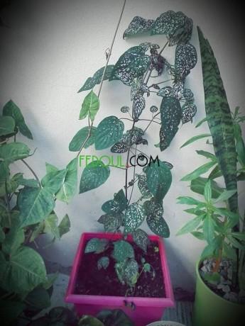 plantes-dinterieurs-big-8