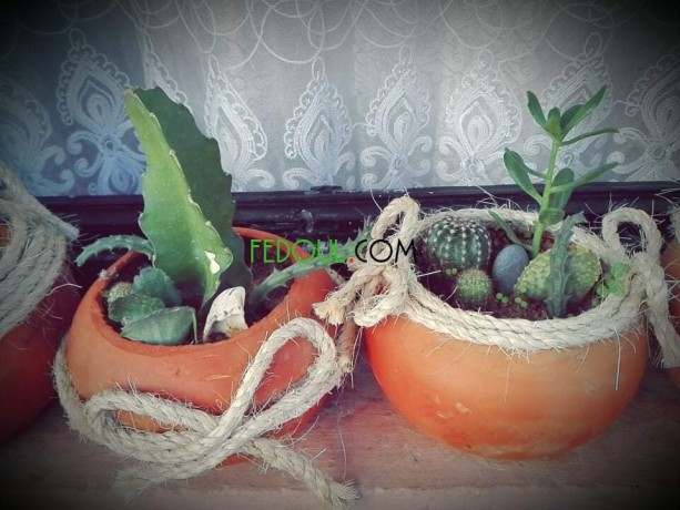 plantes-dinterieurs-big-0