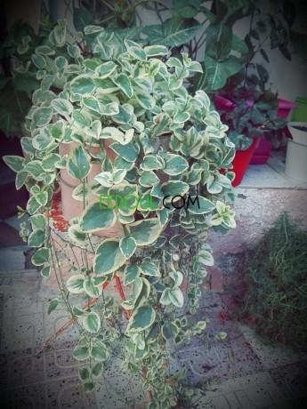 plantes-dinterieurs-big-4