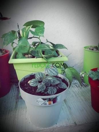 plantes-dinterieurs-big-12