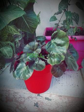plantes-dinterieurs-big-6