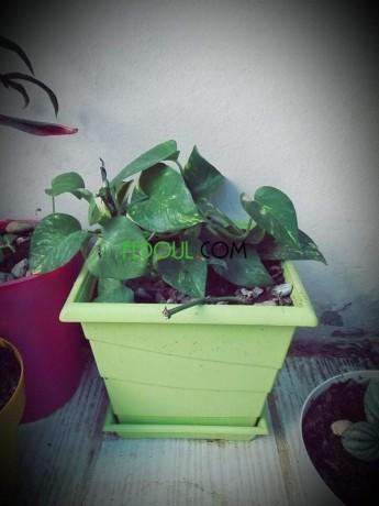 plantes-dinterieurs-big-9