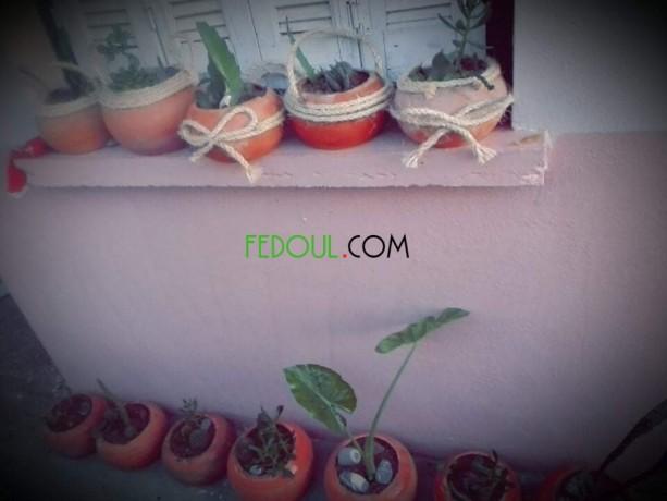 plantes-dinterieurs-big-17