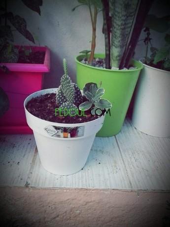 plantes-dinterieurs-big-5