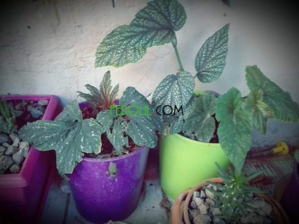 plantes-dinterieurs-big-14