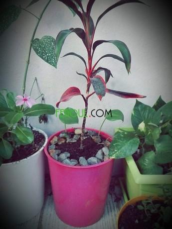 plantes-dinterieurs-big-10