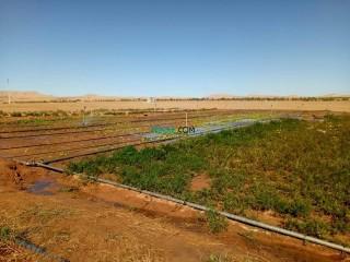 ارض فلاحية للبيع في ولاية الجلفة مدينة حاسي بحبح