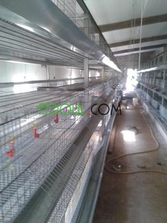 tout-materiel-avicole-et-agricole-et-services-big-7