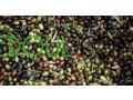 aasl-hr-o-zyt-alzyton-miel-et-l-huile-d-olive-small-19