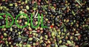 aasl-hr-o-zyt-alzyton-miel-et-l-huile-d-olive-big-19