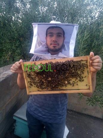 aasl-hr-o-zyt-alzyton-miel-et-l-huile-d-olive-big-8