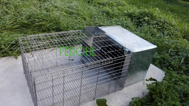 cages-pour-animaux-big-14