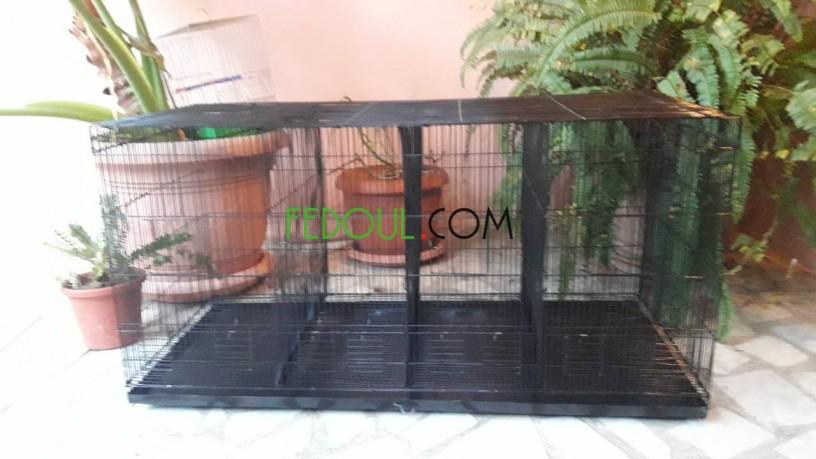 cages-pour-animaux-big-19