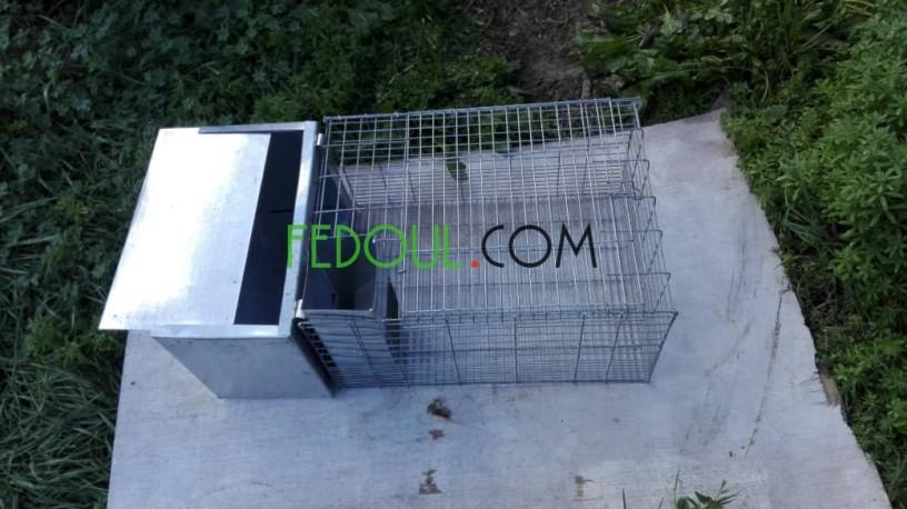 cages-pour-animaux-big-16