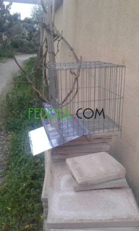 cages-pour-animaux-big-12